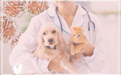 La Proteína C Reactiva en perros tiene alto valor diagnóstico